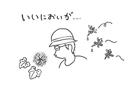 しお風イラスト_カラスウリ