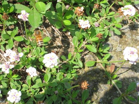 まちなか❤ほっと処6月23日咲いていた花