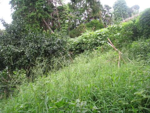 竹の里20150818 (7)