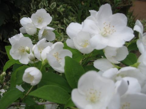 まちなか❤ほっと処5月28日咲いていた花