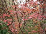 ゆるゆるランニング3日目♡秋の名残や春への期待