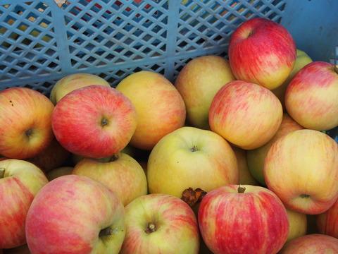 しょうなんりんごが美味しい