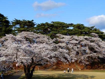 2021桜(烏ヶ森)