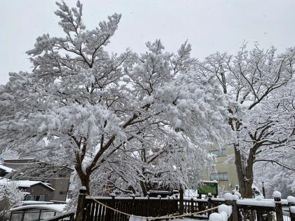 20210124雪の塩原_210124_9