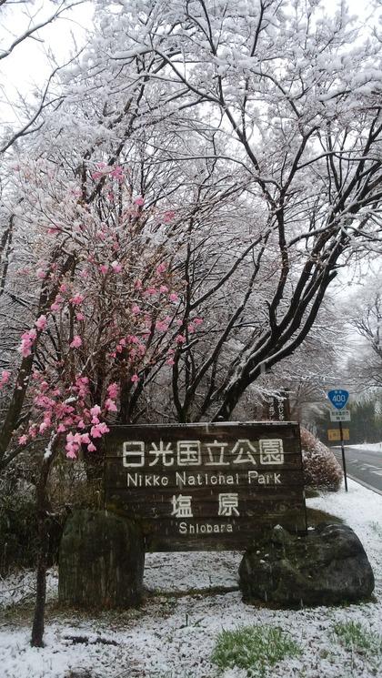 那須塩原『塩原温泉に雪が降りました』道路状況は?