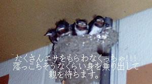 31af5113.jpg