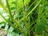 10黒豆花