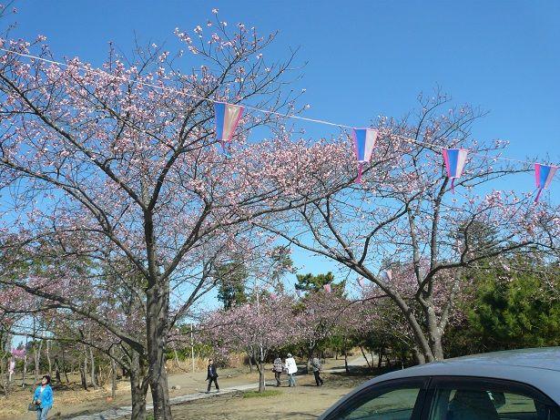 P1060362しらこ桜祭り20
