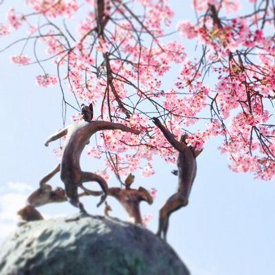 さくら物産館の桜
