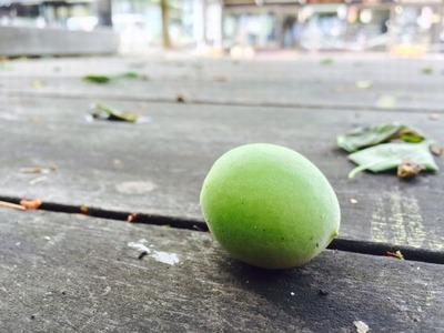 大横町公園の梅