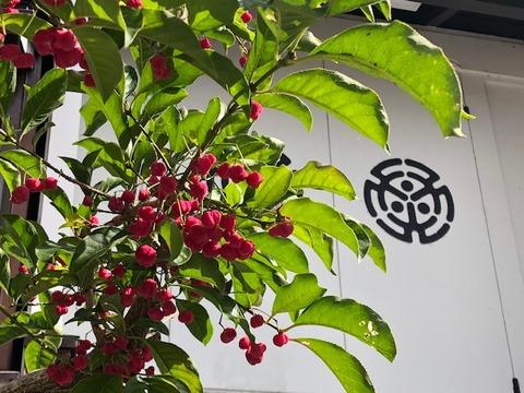 檀の木と三光臺蔵