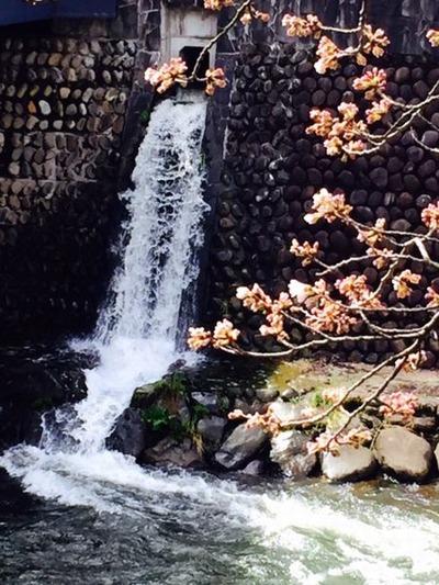荒城川の桜20160408リサイズ