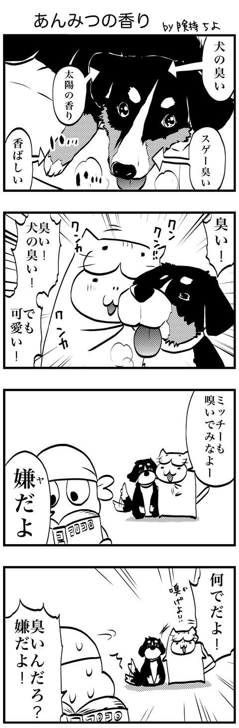 犬 11・14