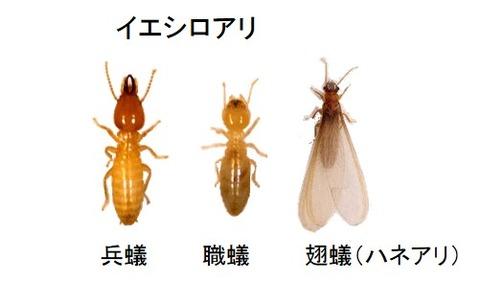 夕刻に飛ぶ羽アリとご注意頂きたいこと