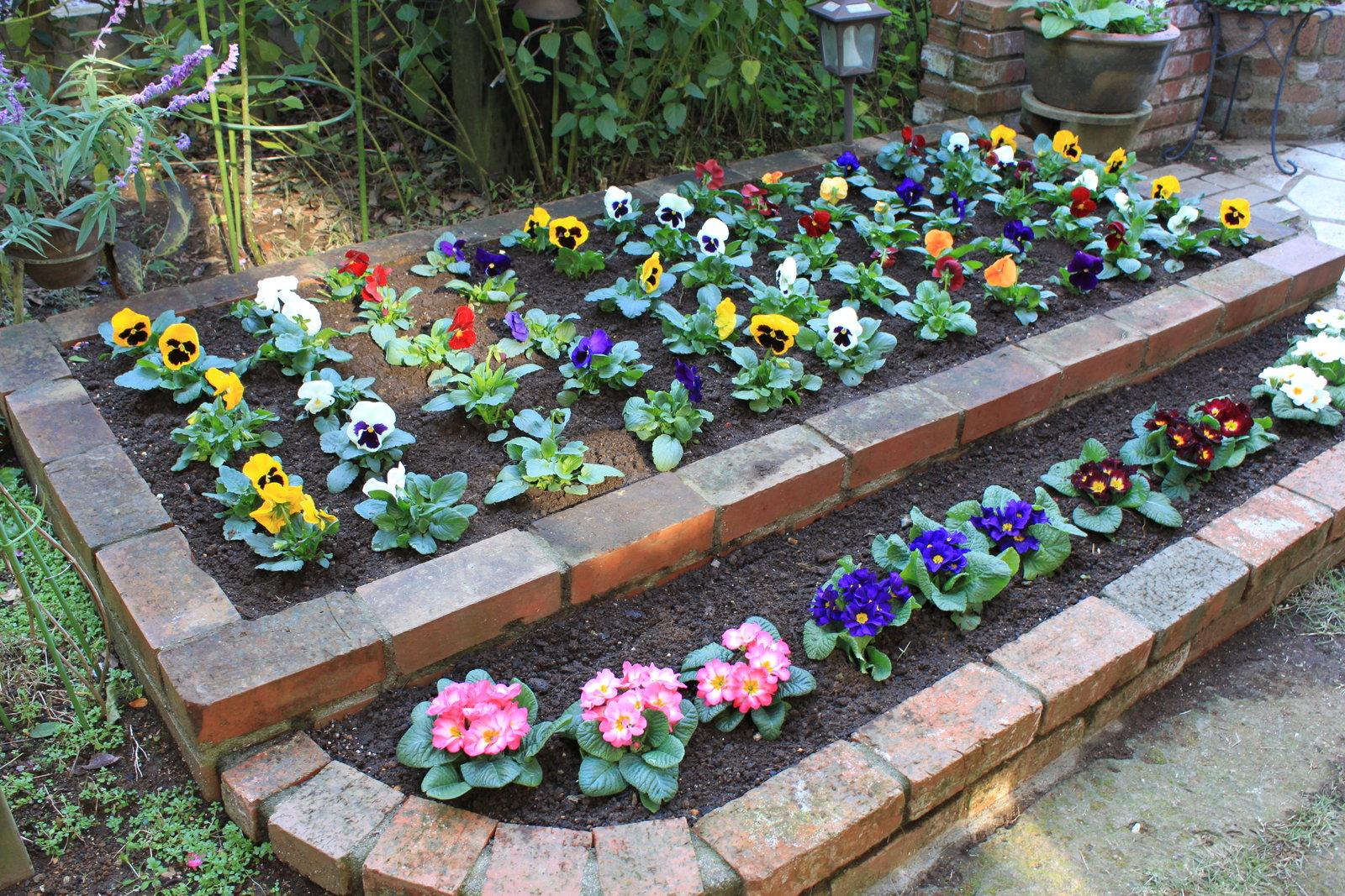 冬 花 花壇