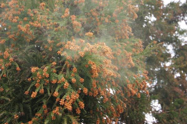 花粉症 ランニング