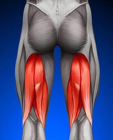 ハムストリング(大腿二頭筋) 筋肉 筋トレ 鍛え方