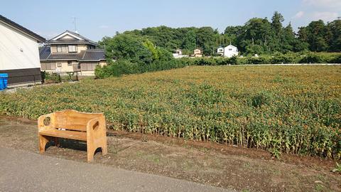 20190625_道の駅桶川5