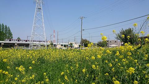 20200429_羽貫駅前2