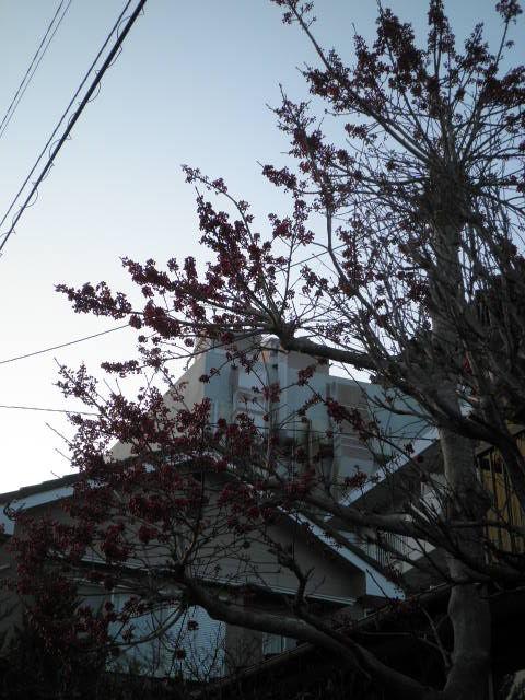 っ2012 春 猫 017
