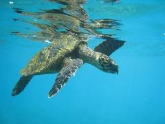 Seychelles38
