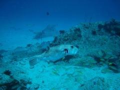 Seychelles35