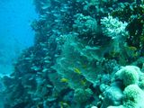 080412 diving22