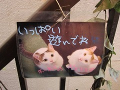 gatto08