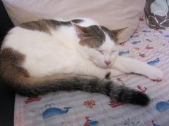 gatto15