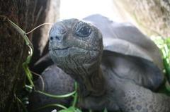 Seychelles23