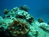 080412 diving15