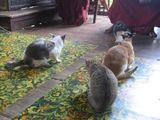 070519 cat1
