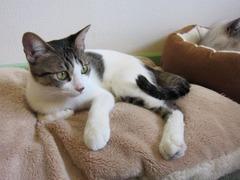 gatto13