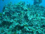 080412 diving17