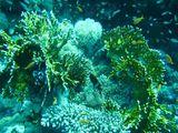 080412 diving21