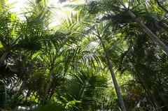 Seychelles18