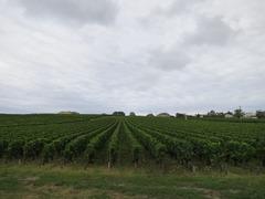 BordeauxM27
