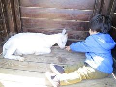 Geitenboerderij13