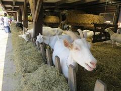 Geitenboerderij26