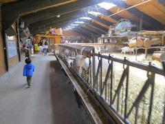 Geitenboerderij22