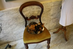 KattenKabinet04