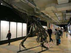 Dinosaurs26