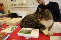 KattenKabinet23