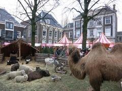 Dordrecht13