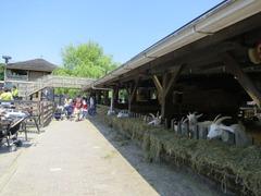 Geitenboerderij28
