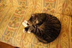KattenKabinet13