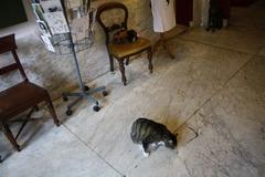 KattenKabinet02