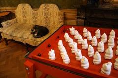 KattenKabinet18