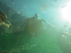Sealife25