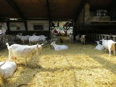 Geitenboerderij23